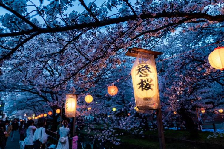 sakura-tutta-la-fragile-bellezza-dei-fiori-di-ciliegio